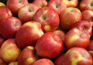 Manzana: Al productor le pagan 2,5 pesos por kilogramo y en las verdulerías cuesta 29,2. Es una de las frutas con mayor diferencias: 11,69 veces más cara al consumidor, el 1.067% más.